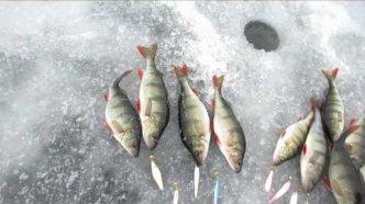 Рыбалка -  соревнование по ловле на блесны. Небольшой отчет о выезде на  Ладогу.