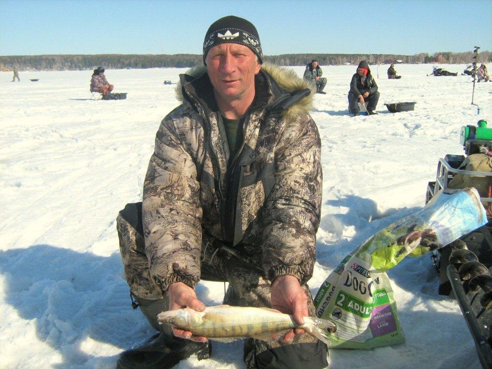 прогноз клева судака в новосибирске