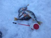 новости о рыбалки новосибирске на водоемах