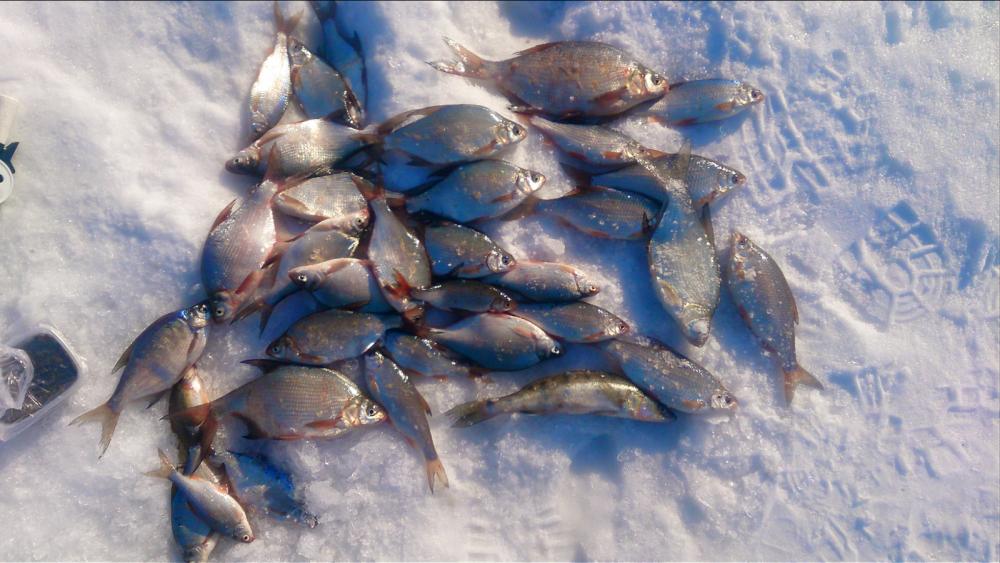 рыбалка в тальменке