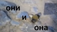 Жуки и НЛО. Река Ахтуба, Харабалинкский р-н. Челышев студия рыбалки.