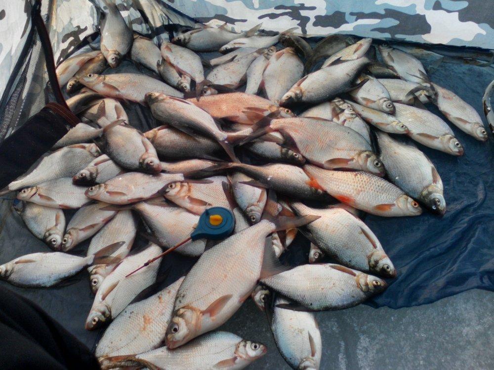 вести от водоемов новосибирск сайт новосибирских рыбаков