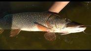 Как я ловлю щуку на сложной рыбалке
