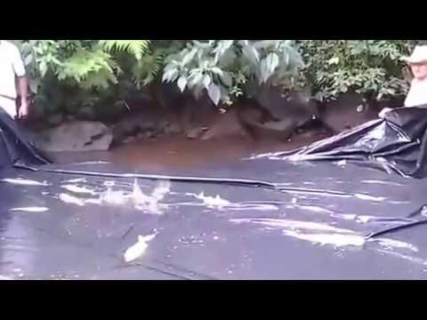 осташкове клев рыбы на 14 дней