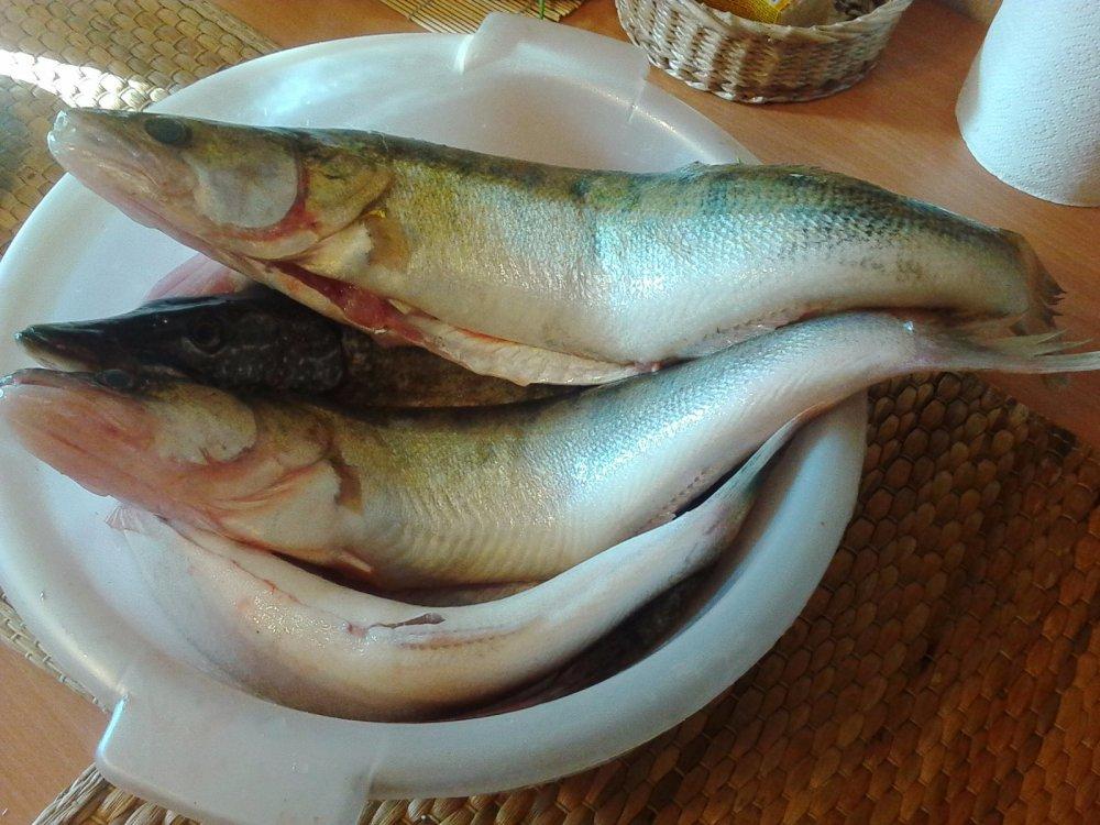 клюет рыба в рыбном