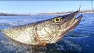 Рыбалка, щука, самые клёвые моменты...