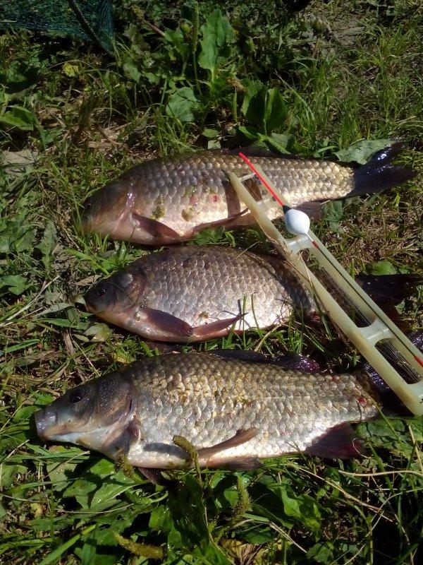 прогнозы клева рыбы в карасуке
