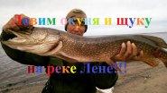 Ловим окуня и щуку на реке Лене в Якутии