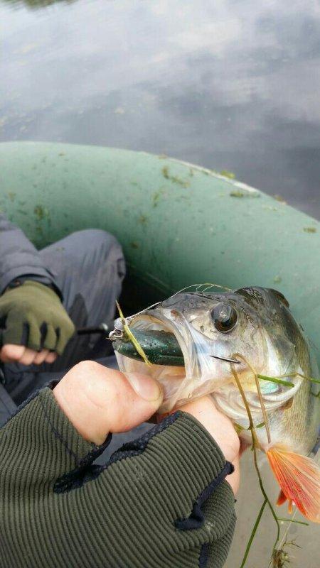 рыбак поймал окуня на 250 кг