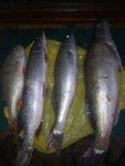 рыбалка обь база