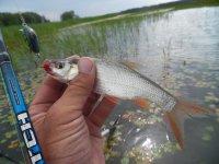 рыбалка на телячьем острове