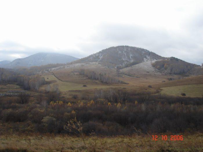 Алтайский маральник.