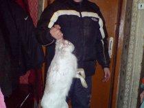 Мой первый заяц в статусе официального охотника