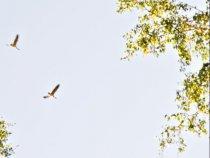 Эти гуси успешно пролетели над местом нашей стоянки на расстоянии выстрела.... Автор фото А.В.Демидов