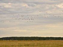 """Крякаши перед посадкой на поле. Автор фото """"Суровый мужик"""""""