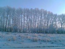 Зимний лес. Фото от 9 декабря 2007.
