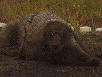 Вот это я спрятался! Умный, однако! Не видно меня? Медведь я все-таки.