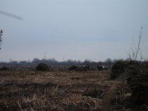 Петушиные бои в Кожевниковском районе