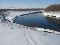 Ну, зима, она и в Новосибирске и в Африке - зима. Мишки уже встали, видите - натоптали. А мы, балбесы, ждем утку.