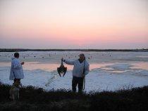 Пролет гусей на ЯМАЛЕ 2008