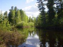 Июнь на таежной речке Запорная