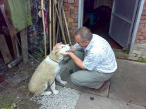Знакомство с Буржуем, щенком средне-азиатской овчарки.