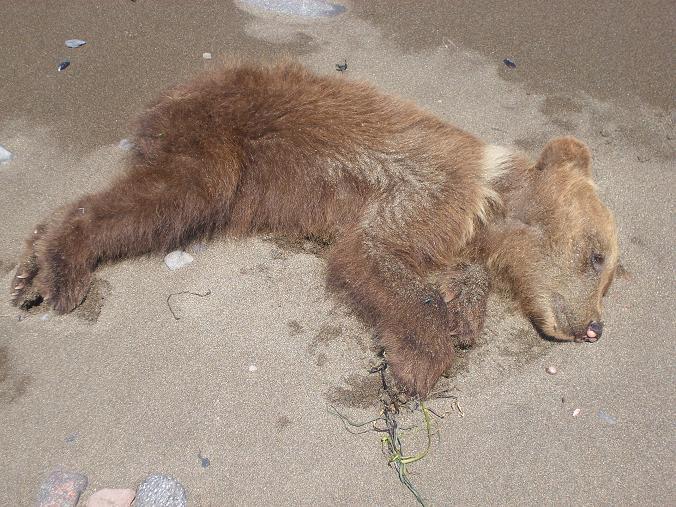 Нашли на берегу моря. Жалко малыша, умер бедолага.