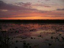 Чулымский, Дедушкино озеро (заросло все кувшинкой блин)