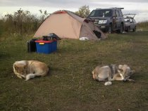 Спят усталые игрушки.