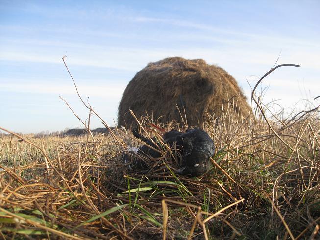 Результат охоты на осеннем току
