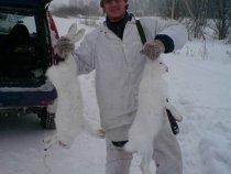 Прошлый год радовал численностью зайца в Тогучинском р-не!