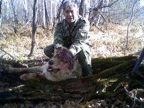 25 октября 2008г. в Искитимском р-не г.Новосибирска был добыт волк, весом более 40 кг.