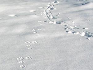 Зимний след