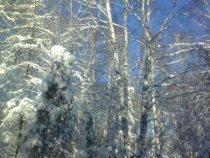 Зимний день!