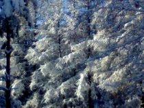 Лучи зимнего солнца в лесу!