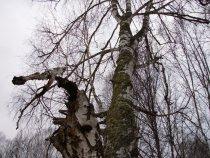 Деревце..