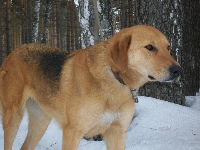 Лада, продолжение линии собак Военного А.А.