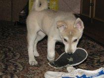 моя собака)