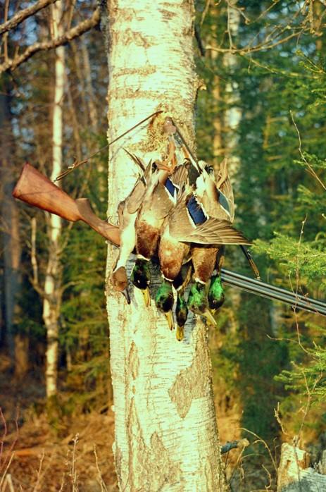 Радует глаз любого охотника