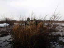 Где вы, гуси-лебеди?