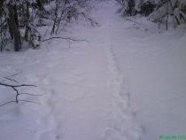 Зайчья магистраль:)