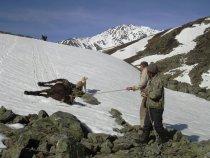 Очень труден путь к горным козликам.