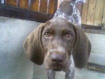 Моя собачка - Рита!!!(4 мес.)