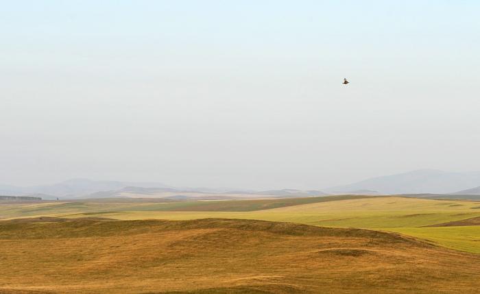 Косач над осенними полями