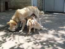 моя Дина с щенками