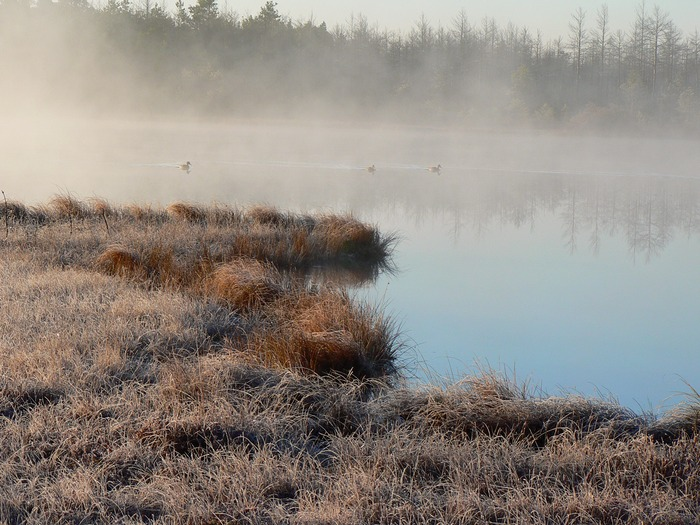 Туманным утром октября.