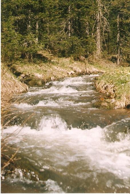 чисты воды нашей тайги!