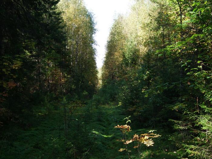 лес  осенью)