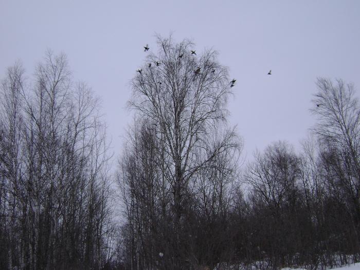 вот они голубки