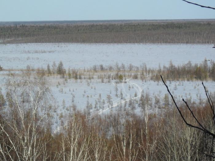 буранницы на болоте